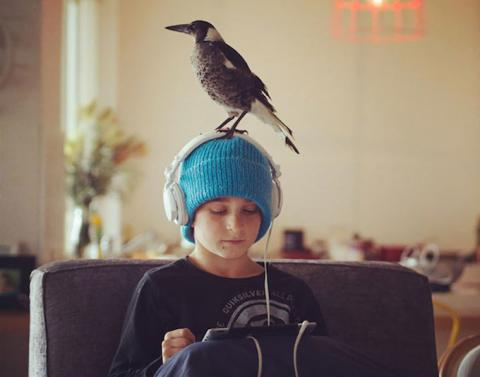 Rescued magpie is now this familys beloved pet