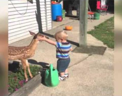 Little boy makes friends with a baby deer