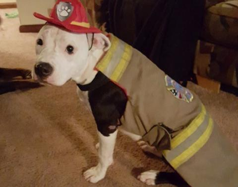 Puppy who survived near fatal fire is now a firefighter