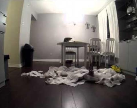 Cats get into the paper towelsthis is the result