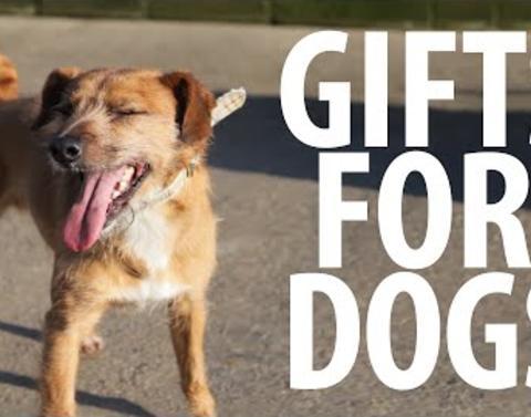 Shelter dogs receive gifts run slash bark slash jump for joy
