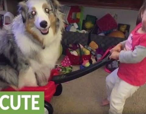 Dog takes a ride on the toddler train