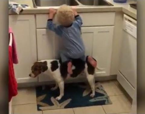 Helpful dog serves as step stool for toddler