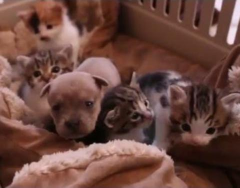 Puppy is adopted dot dot dot by family of cats