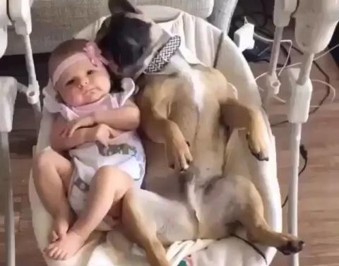 This dog and this baby are just chilling in a swing