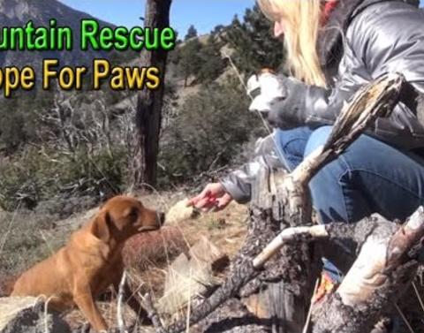 Truly heartwarming story of three dogs rescued from a mountain w