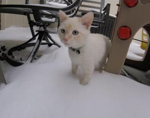 Kitten that nearly froze to death shows snow no fear