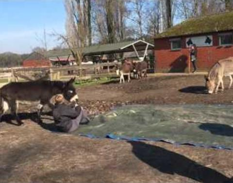Donkeys gather to say goodbye to fallen friend