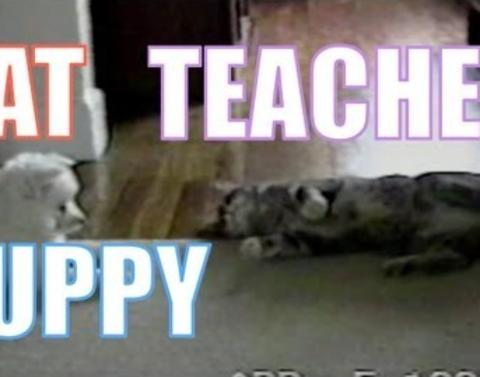 Who says you cant teach a dog new tricks this cat sure can