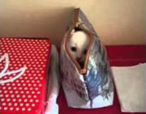 Awesome kitten plays hide and seek in moms handbag