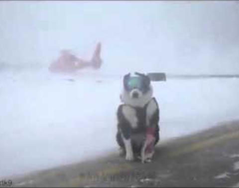 Incredible dog protects airplanes trying to land