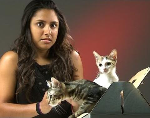 Cat haters freak out over meeting kittens