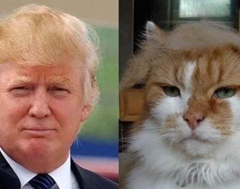 13 cats who looks just like famous people