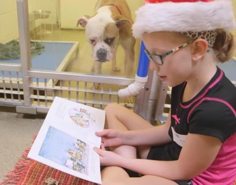 Kids read to shelter dogs elicit all the tears we can muster