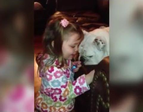 Little girl gives her bulldog a manicure