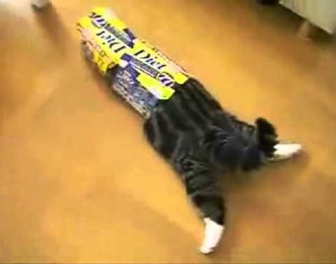 This cat is very easily entertained