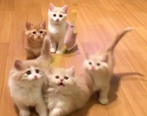 Adorable kittens at play will make your entire week
