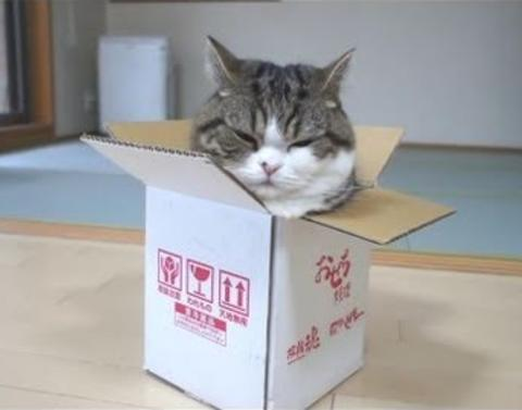 Portly pussy forces behind into bitty box