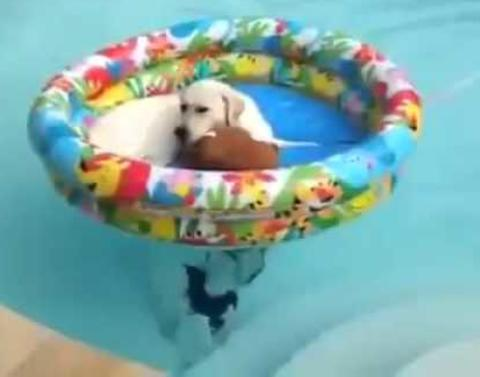 Dog chills out in two pools at once