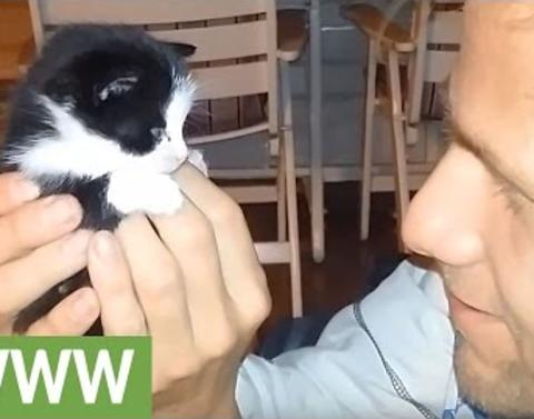 Rescued kitten wobbles around new home