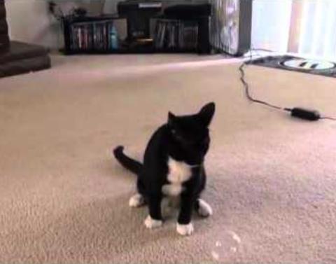 Kitty vs bubbles internet wins