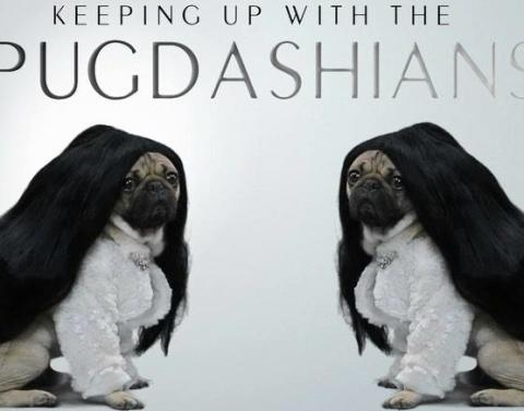 Keeping up with the pugdashians possibly coming soon