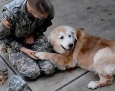 Golden retriever cannot handle surprise arrival of heroic owner