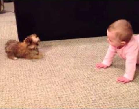 Baby talks puppy language and finds it hilarious