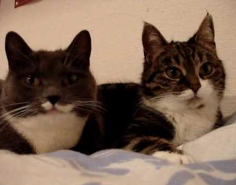 Chatty cats hold private conversation