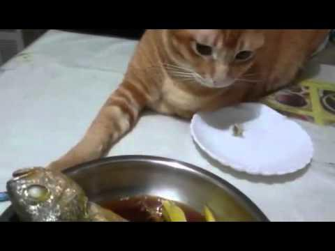 This cat can t stop touching the fish myfanatic for My fish stop