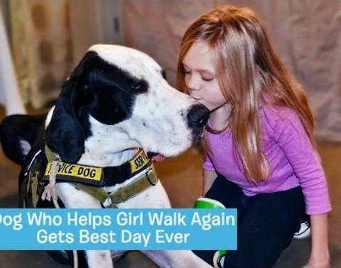Well deserving service dog is treated to best day ever