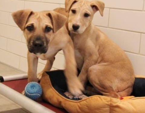 Rescued puppies experience first ever bed belly rubs and more
